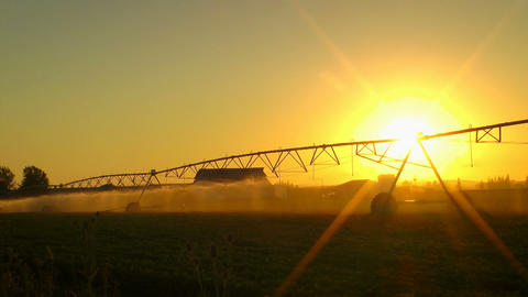 Agriculture Field Sprinkler Stock Video Footage