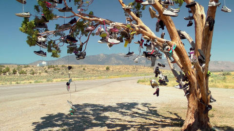 Tree full of Shoes Footage