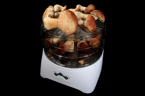 4K. Drying mushrooms in Electric driers on the bla Stock Video Footage