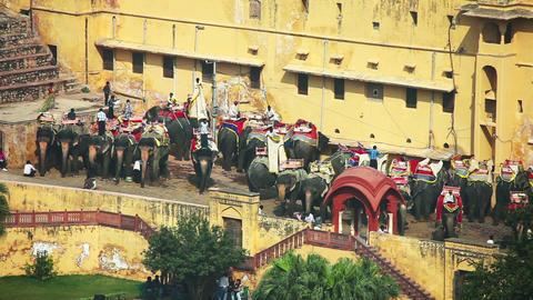 Elephant taxi Footage