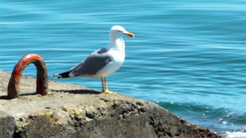 Sea gull on the quay Stock Video Footage