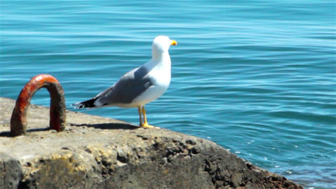 Sea gull on the quay Footage