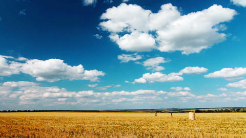 yellow field and cloudy sky Stock Video Footage