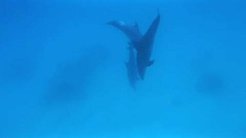 dolphin 2 Stock Video Footage