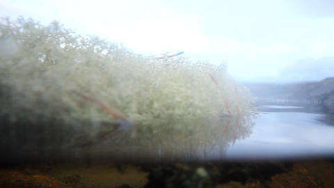 eco island from a white moss Stock Video Footage