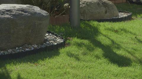 HD a lawna grass plot Japan Stock Video Footage