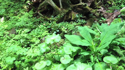 Terrace_Forest_Furano Stock Video Footage