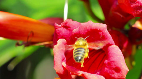 flower and bee Stock Video Footage