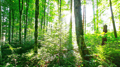 morning in the forest Stock Video Footage