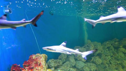 Sharks stock footage