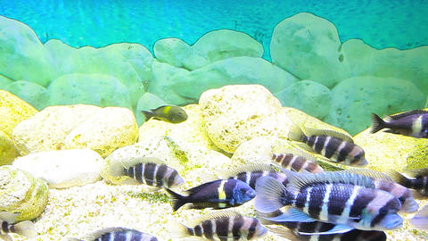 Coral Fish stock footage