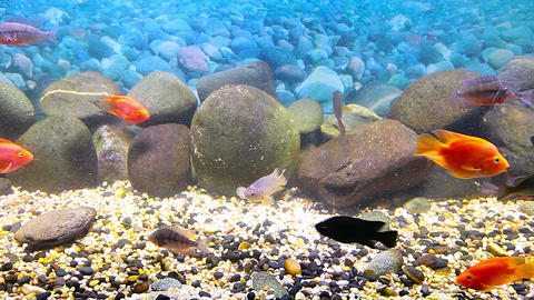 coral fish Stock Video Footage
