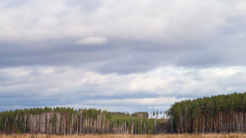 Clouds over the pine forest. Time Lapse. 4K Footage