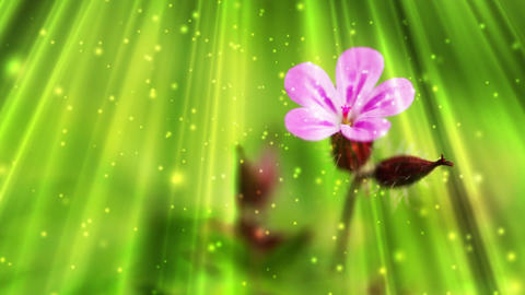 Fairy Tale Stock Video Footage