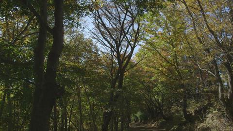 HD Momiji Japan Stock Video Footage