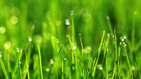 drops of dew on a green grass Footage