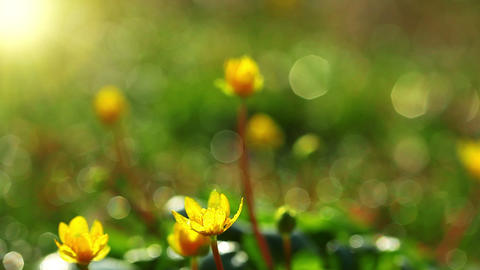 spring grass and flowers Stock Video Footage