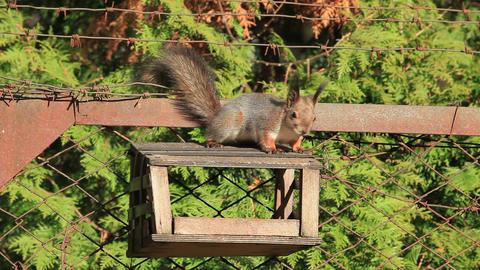 Squirrel Footage