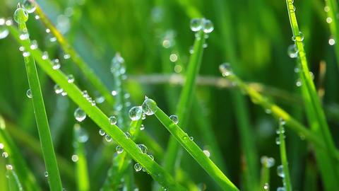 frozen spring grass Stock Video Footage