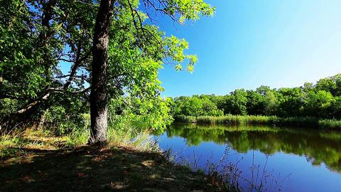river landscape Footage