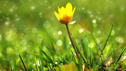 spring grass and flower Stock Video Footage