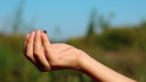 a child releases ladybirds Stock Video Footage