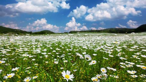 summer landscape - timelapse Stock Video Footage