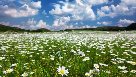 summer landscape - timelapse Footage