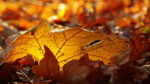 autumn foliage Stock Video Footage