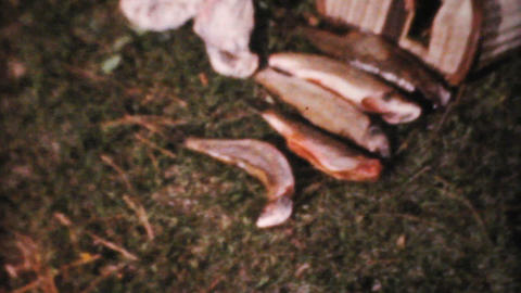 Fresh Catch Of Fish 1961 Vintage 8mm film Stock Video Footage