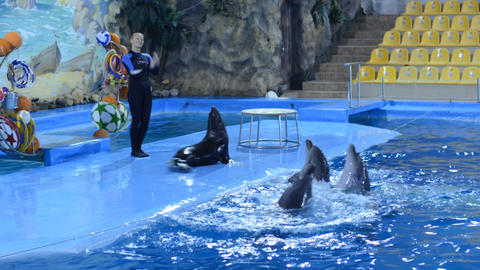 Trained Dolphins Swimming in Blue Water, Closeup Stock Video Footage