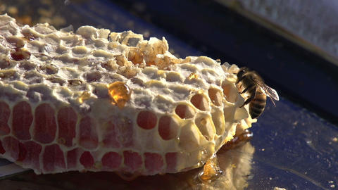 Honey in the Comb HD Stock Video Footage
