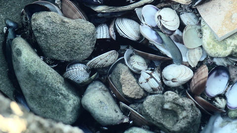 Shells in water Stock Video Footage