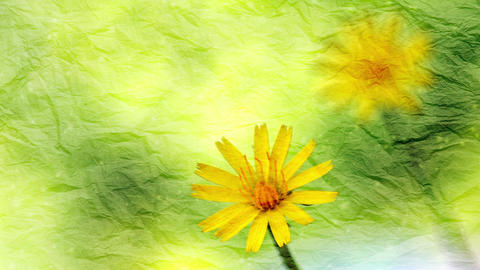 Flowers Animation