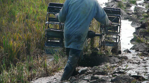 Ploughing rice field Stock Video Footage
