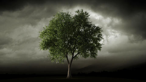 Big tree loosing leaves in autumn Stock Video Footage