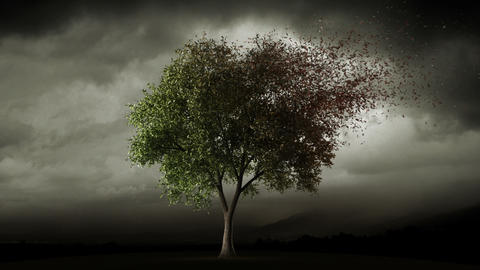 Big tree loosing leaves in autumn Animation