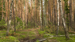 Moving camera in the summer forest with tree trunk Stock Video Footage