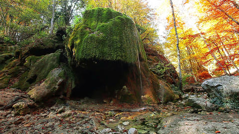forest river - waterfall Stock Video Footage