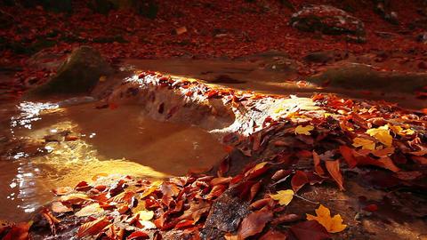 autumn mountain small river Stock Video Footage