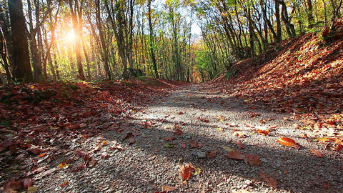 road is in the autumn forest Stock Video Footage