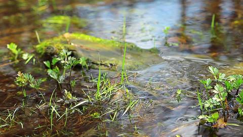 spring brook Stock Video Footage