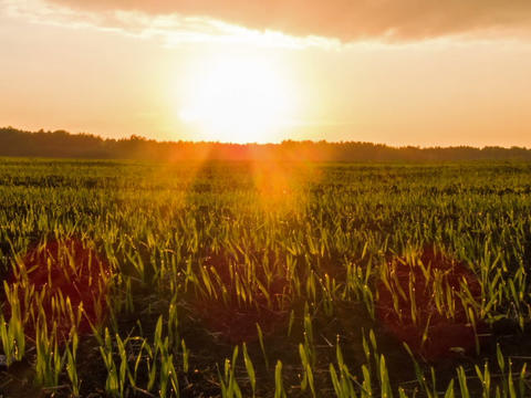 Sprouts at sunset. Time Lapse Footage
