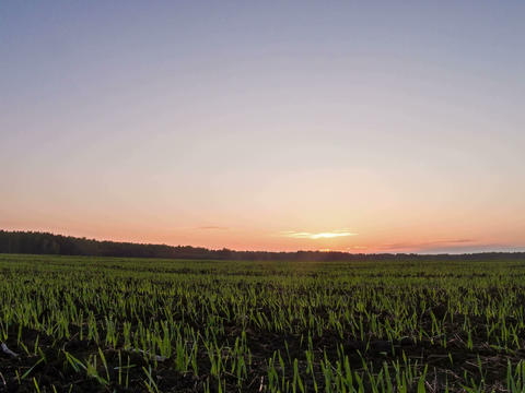 Sprouts at sunset. 4x3. Time Lapse Stock Video Footage