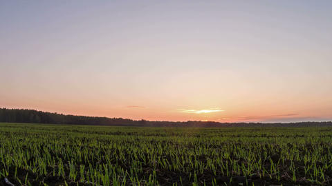 Sprouts at sunset. Camera movement from top to bot Stock Video Footage