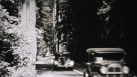 Cars Driving Through Redwood Forest 1940 Vintage Footage