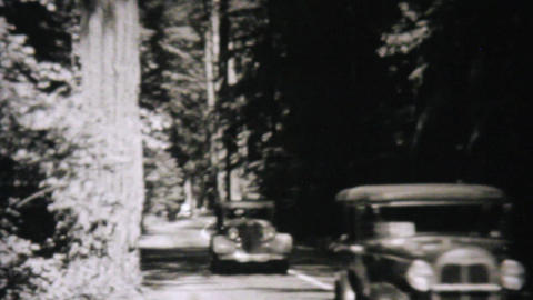 Cars Driving Through Redwood Forest 1940 Vintage Stock Video Footage