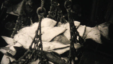 Fresh Catch Of Alaskan Halibut 1940 Vintage 8mm Stock Video Footage