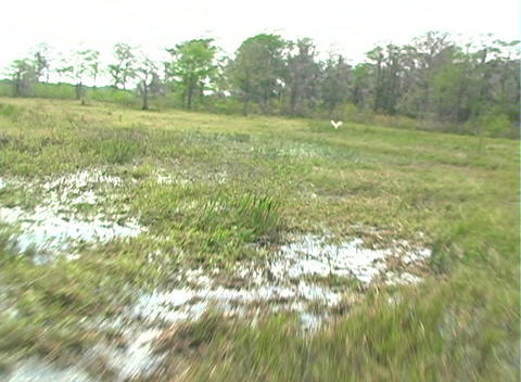 View from an Airboat (1) Stock Video Footage