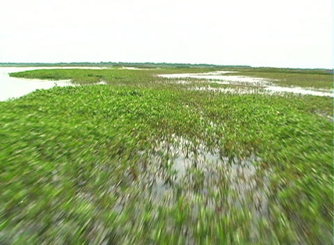View from an Airboat (3) Stock Video Footage